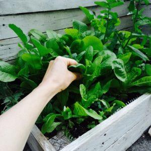 salat (1)